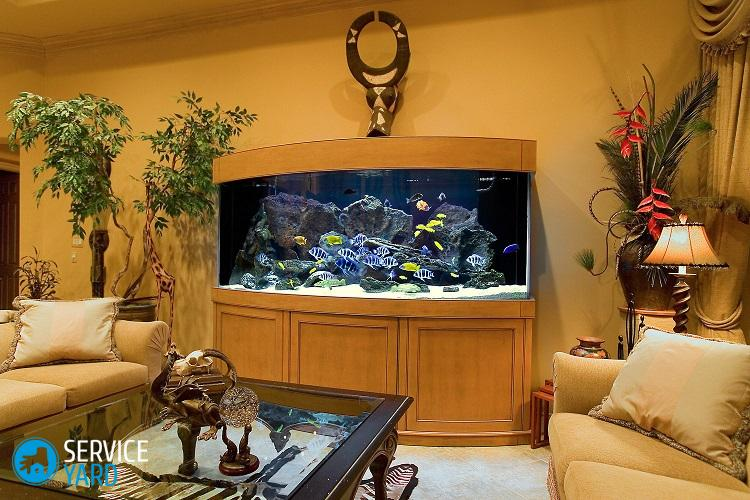 1-aquarium_interior_fishtank